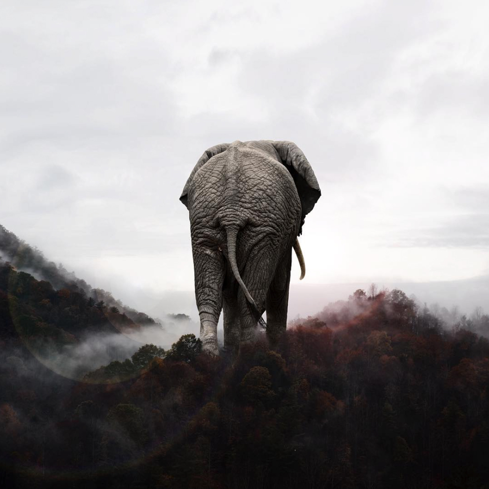 deco_karen_cantuq_illustrations_elephant