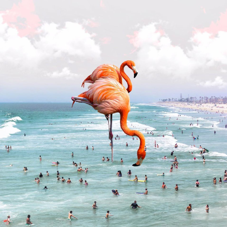 deco_karen_cantuq_illustrations_flamingos